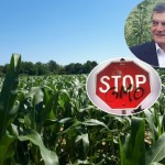 KUKURUZ_GMO_Vlaović